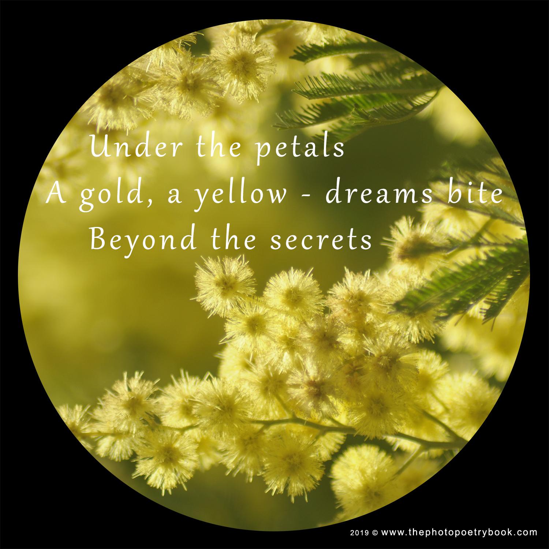 A Photohaiku - Haiku 1 - Secrets